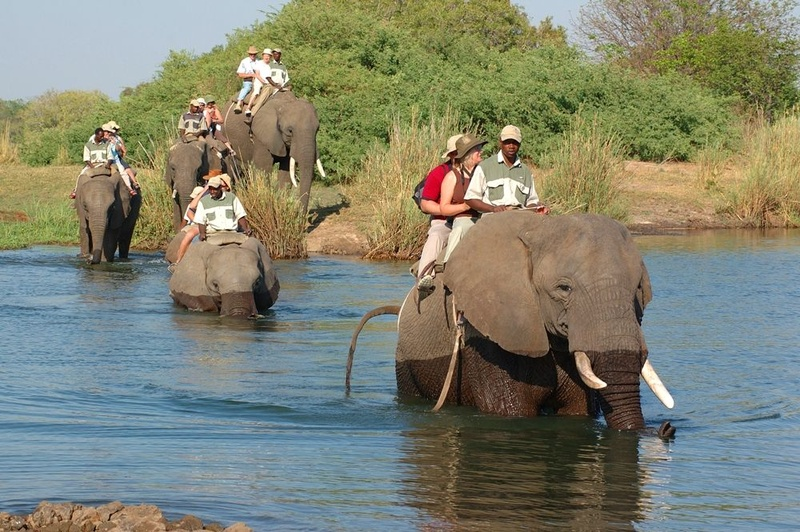 Elephant Back Safari - Livingstone